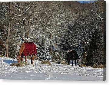 Eating Hay In The Snow Canvas Print by Denise Romano