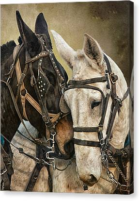 Ebony And Ivory Canvas Print by Ron  McGinnis
