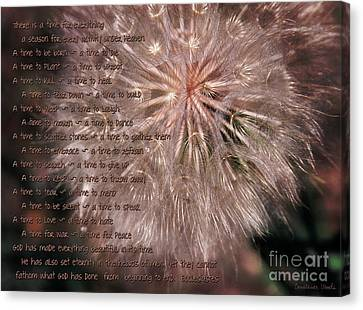 Ecclesiastes Seasons Canvas Print by Constance Woods