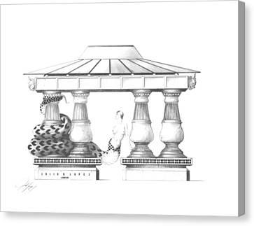 Echidna Canvas Print by Julio Lopez
