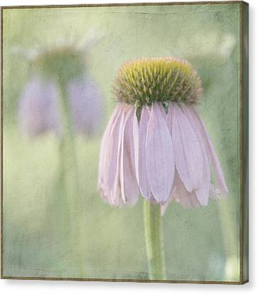 Coneflower Canvas Print - Echinacea Coneflower by Juli Scalzi