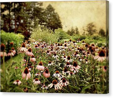 Cone Flower Canvas Print - Echinacea Garden by Jessica Jenney