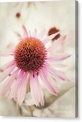 Echinacea Canvas Print by Priska Wettstein