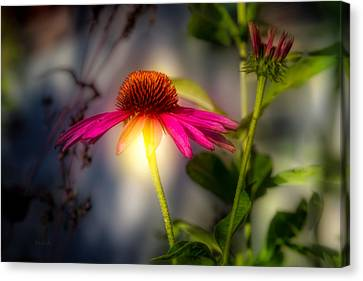 Coneflower Canvas Print - Echinacea Sunrise by Bob Orsillo