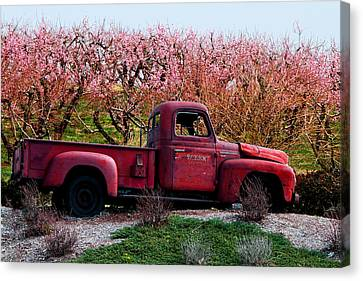 Eckert Orchards Belleville Canvas Print