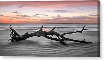 Jeckll Island Canvas Print - Ecstacy 2 by Debra and Dave Vanderlaan