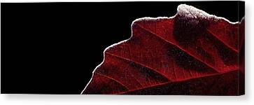 Edge Of Autumn Canvas Print by Steven Milner