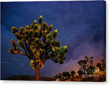 Edge Of Town Canvas Print by Angela J Wright