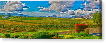 Edna Wineries Ca Canvas Print