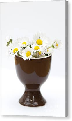 Eggcup Daisies Canvas Print