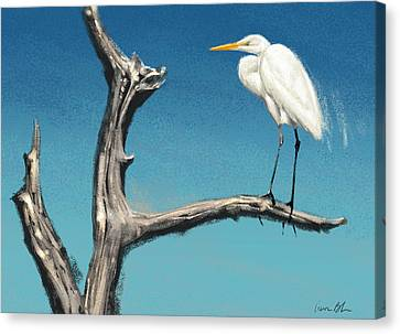 Egret Canvas Print by Aaron Blaise