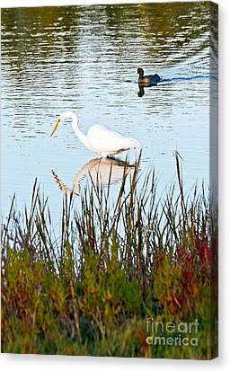 Canvas Print featuring the photograph Egret And Coot In Autumn by Kate Brown