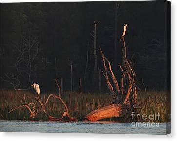 Canvas Print featuring the photograph Egret And Osprey Sunrise by Deborah Smith