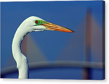 Canvas Print featuring the photograph Egret And Skyway II by Daniel Woodrum