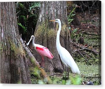 Egret And Spoonbill Canvas Print by Theresa Willingham