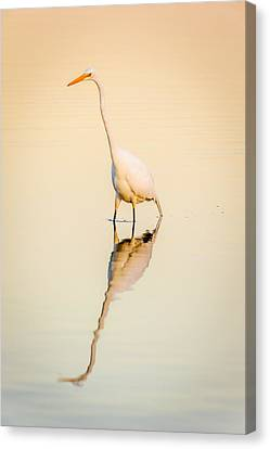 Egret At Dusk Canvas Print