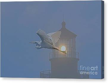 Egret At Hatteras Canvas Print