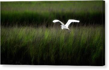 Canvas Print featuring the photograph Egret At Pawleys Island by Frank Bright