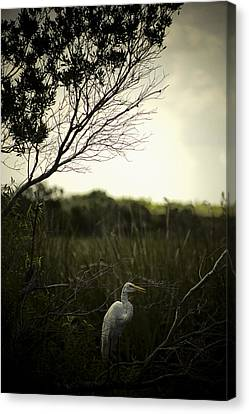 Egret At Sunset Canvas Print by Bradley R Youngberg