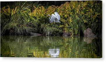 Canvas Print featuring the photograph Egret At The Lake by Chris Lord