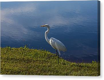 Tropical Canvas Print - Egret At The Lake by Zina Stromberg