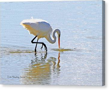 Egret Catches A Fish Canvas Print by Tom Janca