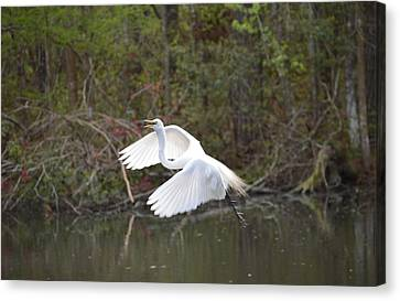 Over The Lagoon Canvas Print by Judith Morris