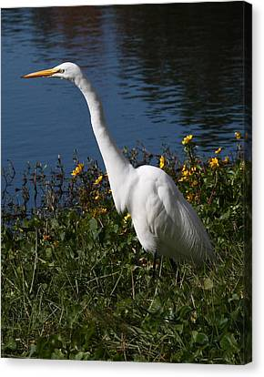 Egret In Flowers 11x14 Vertical Canvas Print
