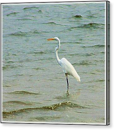 Egret In The Shallows Canvas Print by Ellen O'Reilly
