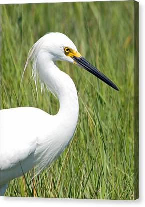 Canvas Print featuring the photograph Egret In The Sound by Greg Graham