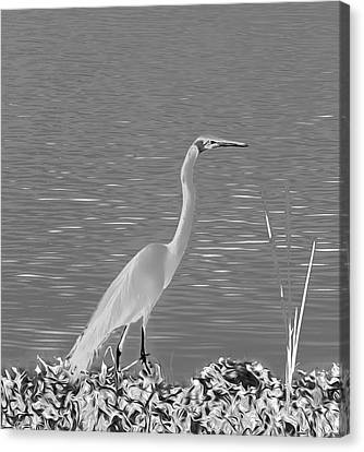 Canvas Print featuring the photograph Egret In White Satin by Frank Bright