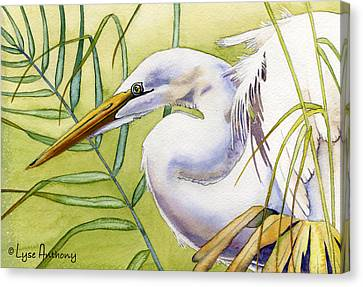 Egret Canvas Print by Lyse Anthony