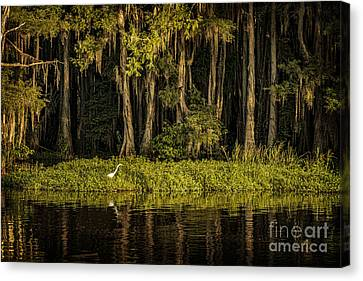 Egret On Caddo Lake Canvas Print by Tamyra Ayles