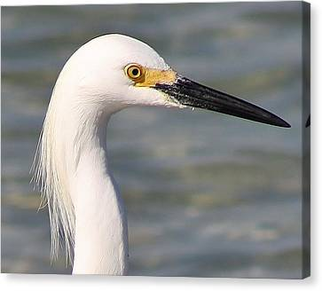 Egret Portrait Canvas Print by Bruce Bley