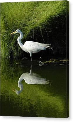 Egret Reflections Canvas Print by Lara Ellis
