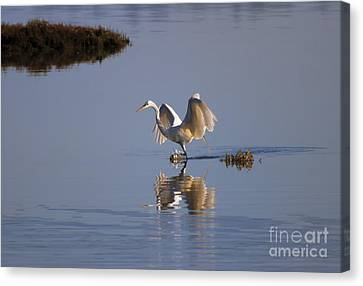 Egret Reflections Canvas Print by Mike  Dawson