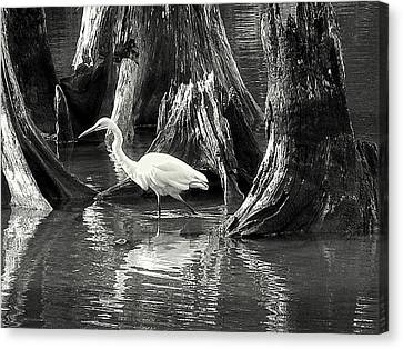 Egret Solitude Canvas Print by Suzy Piatt