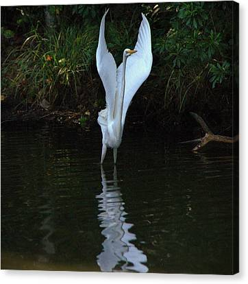 Canvas Print featuring the photograph Egret Take Off by Charlotte Schafer