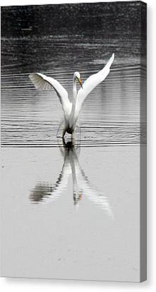 Egret Canvas Print by Valerie Wolf