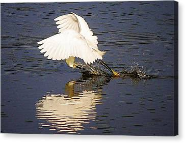 Egret With A Heart Reflection Canvas Print by Paulette Thomas