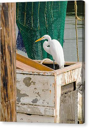 Egret With Fishing Net Canvas Print by Allen Sheffield