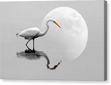 Egret With Moon  Canvas Print