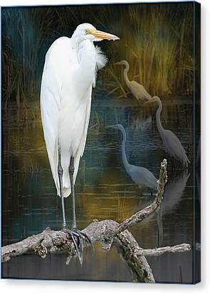 Egrets Canvas Print by John Kunze