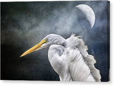 Canvas Print featuring the photograph Egret's Moon by Brian Tarr