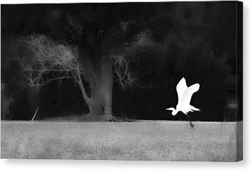 Canvas Print featuring the photograph Egret's Shadow by Frank Bright