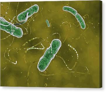 Ehec Bacteria Canvas Print