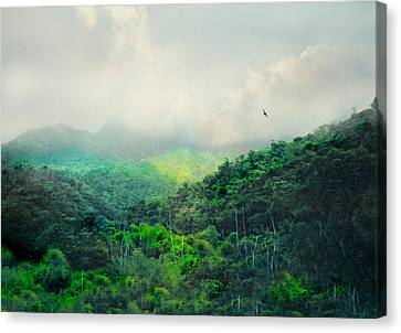 El Yunque Canvas Print - El Yunque National Rain Forest by Diana Angstadt