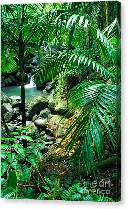 El Yunque Canvas Print - El Yunque Palm Trees And Waterfall by Thomas R Fletcher