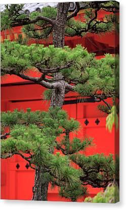 Elaborately Sculpted Pine Trees Canvas Print by Paul Dymond