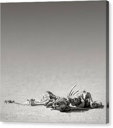 Eland Skeleton In Desert Canvas Print by Johan Swanepoel